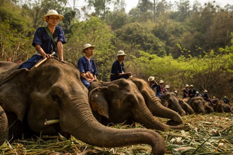 دهکده فیل ها
