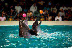 پارک دلفین دبی