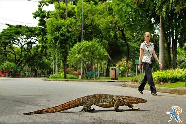 پارک لومپینی تایلند